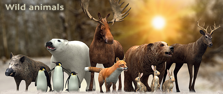 wild animals 3d animated lowpoly moose polar bear boar deer fox rabbit hare penguin